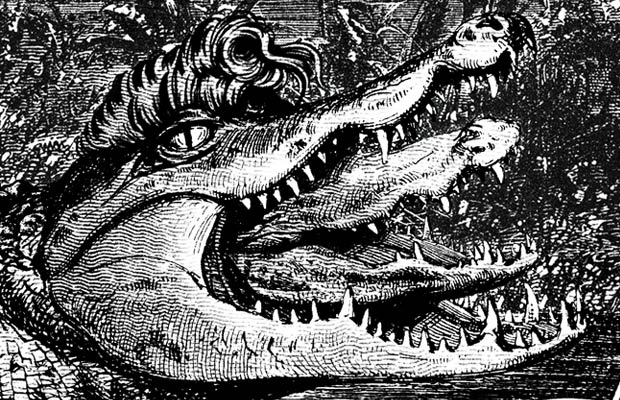 Excello Alligator